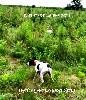 - HATOR DE LANDA GORI :Entraînement chasse !