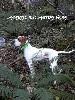 - LARRAU DE LANDA GORI : Bonne saison de chasse à la bécasse . !