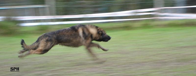 Publication : Des loups du coin de la fontaine  Auteur : www.canilandes.fr