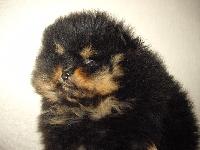 Grizzli des Oursons de petit-palais