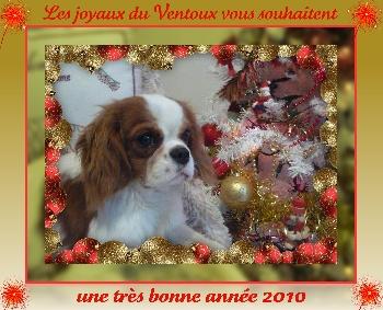 Accueil elevage de blanc miroir eleveur de chiens for Miroir des joyaux