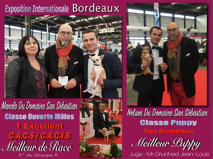 du Domaine San Sébastian - Exposition Internationale Bordeaux