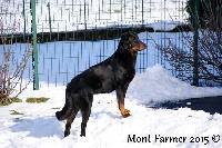 Iweiss Du Mont Farmer