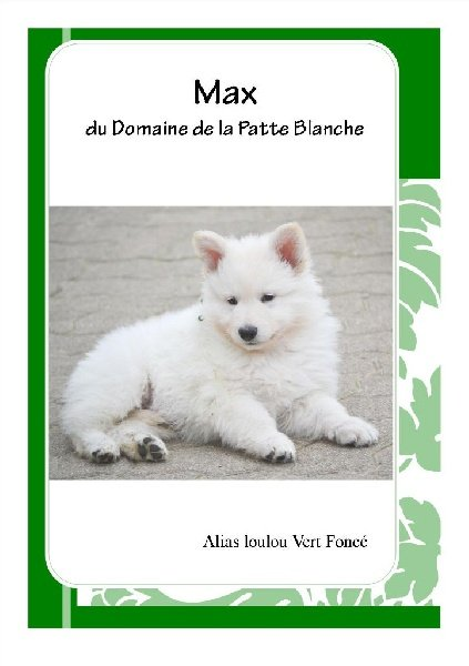 chiot elevage du domaine de la patte blanche eleveur de chiens berger blanc suisse. Black Bedroom Furniture Sets. Home Design Ideas