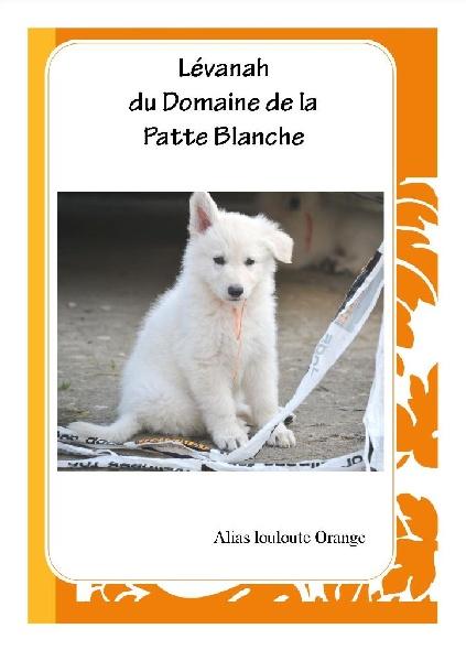 chiot elevage du domaine de la patte blanche eleveur de chiens berger blanc suisse. Black Bedroom Furniture Sets. Home Design Ideas