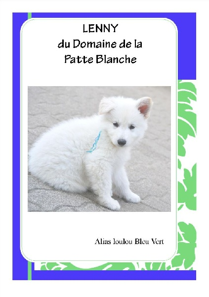 chiot berger blanc suisse lenny du domaine de la patte blanche m le disponible en grand est. Black Bedroom Furniture Sets. Home Design Ideas