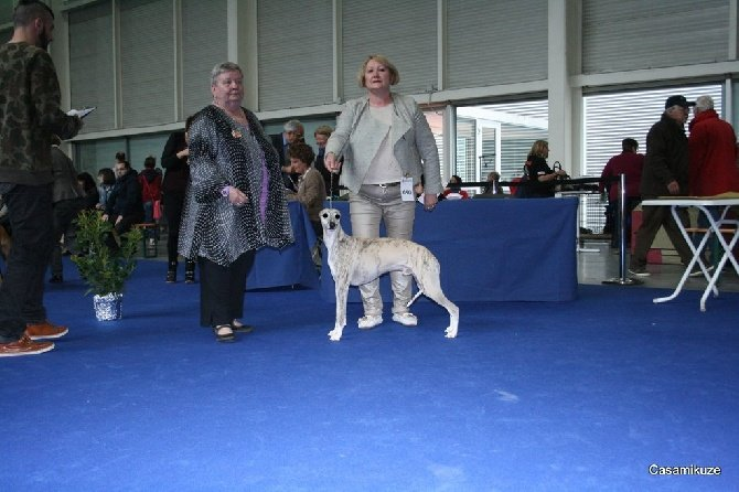 Accueil - Elevage of verywhip - eleveur de chiens Whippet