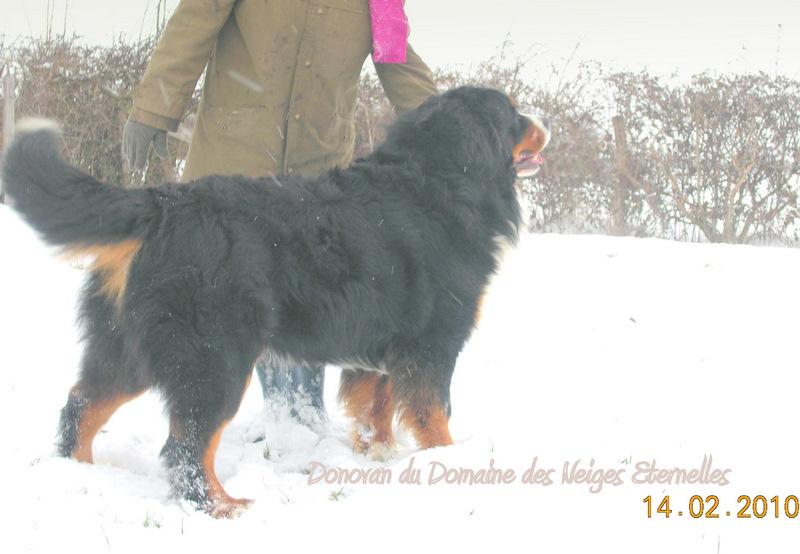 Donovan du domaine des neiges eternelles