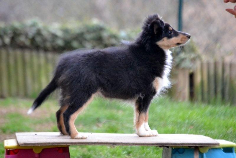 Chiot elevage du domaine du carp eleveur de chiens for Elevage des carpes