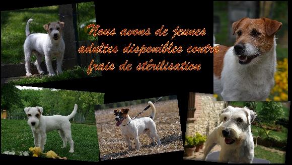 Accueil elevage du domaine du carp eleveur de chiens for Elevage des carpes