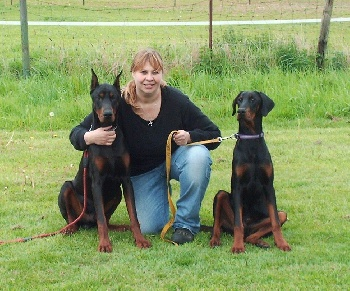 Elevage dobermann van crowded house - Elevage dobermann oreilles coupees ...