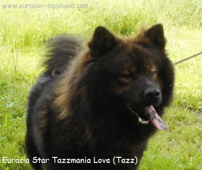 Eurasia Star tazzmania love