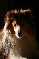 Geronimo blond Des mille eclats des tournesol