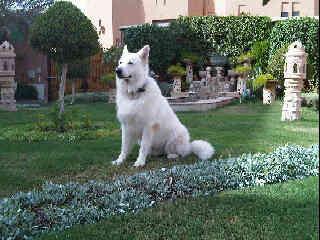Photo elevage du domaine de pegase eleveur de chiens - A poil dans son jardin ...