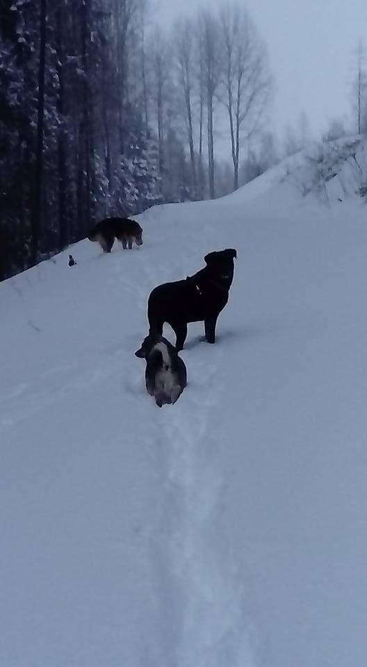 des Gaillards des Terres Froides - IHKU dans la neige en Finlande
