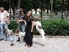 - Nationale d'élevage braque français