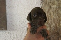 CHIOT F3