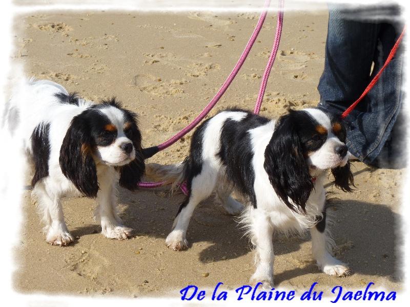 Publication : de la plaine du Jaelma