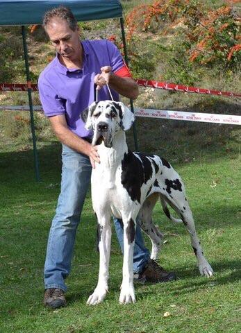 des Joyaux d'Allythelia - Félicia, championne de France