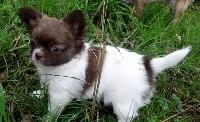 Chihuahua - De la fontaine aux maléfices
