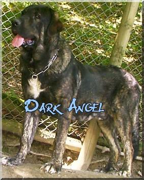 Dark angel de la Montée du Col