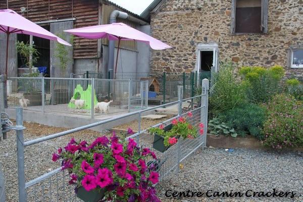 Photo Pension Canine et Féline Crackers