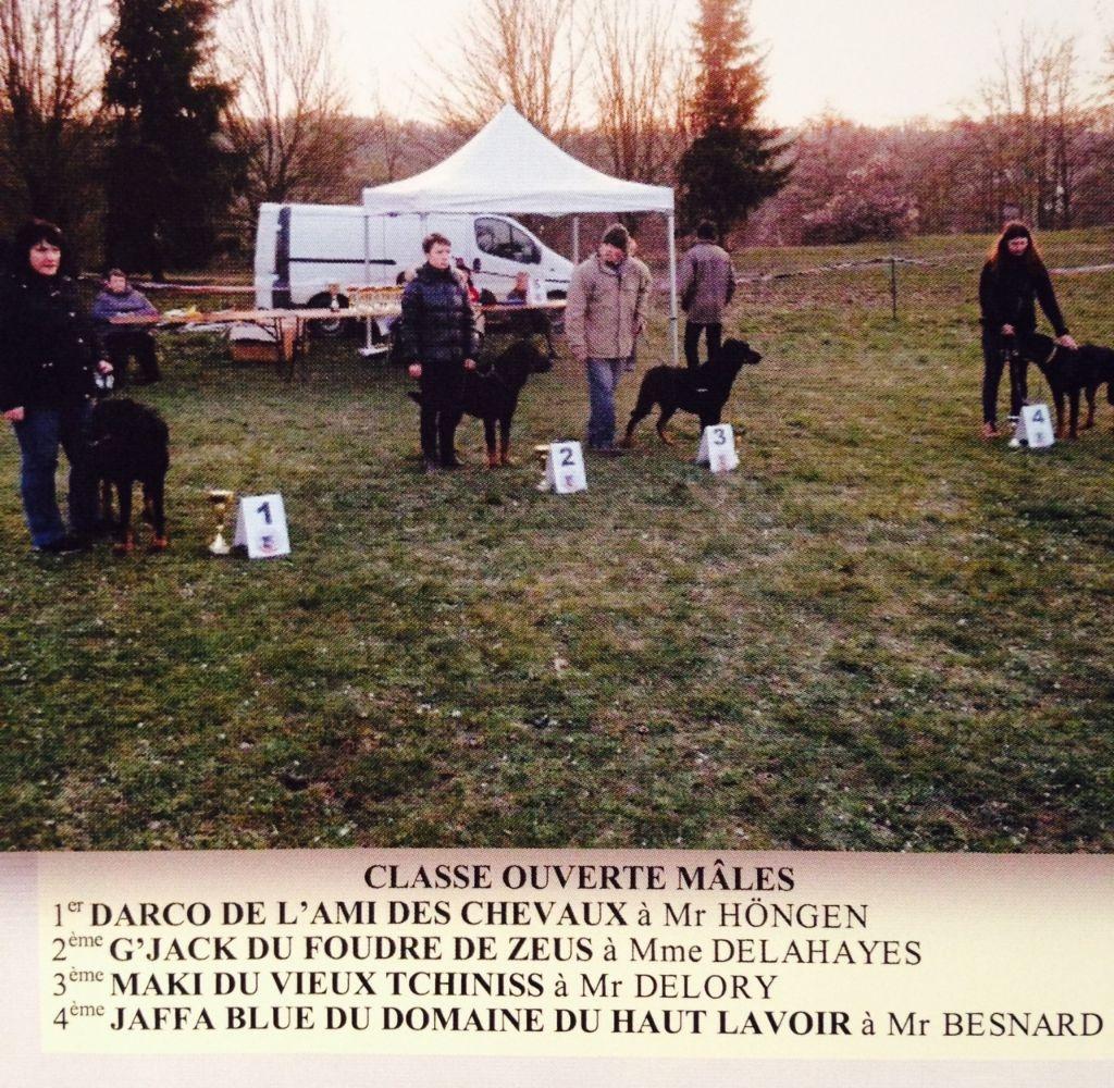 des Bergers de l'Oiseau Jaune - Régionale d'Elevage à Cergy Pontoise
