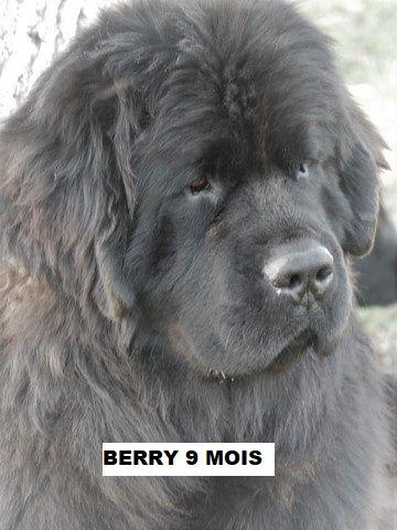 Czech black berry (Sans Affixe)