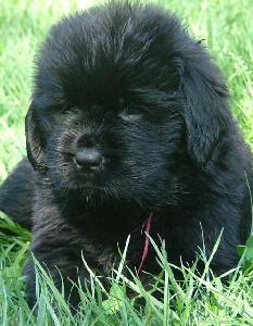 Vous ne savez pas quelle race choisir pour votre chien? Fbdd8c39-46ca-78a4-bdb7-b7a5853aecfd