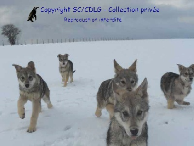 de la compagnie du loup gris - Disponibles !