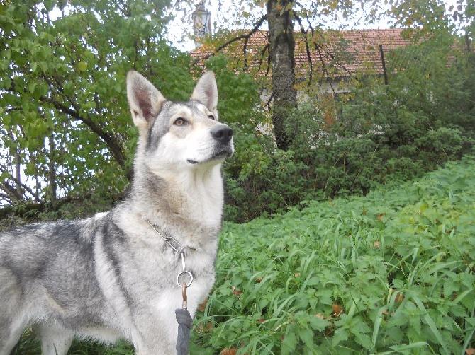 de la compagnie du loup gris - 2016... Mise à jour