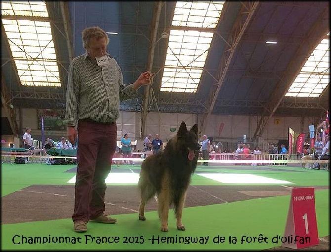 de la Forêt d'Olifan - Championnat de france 2015 !