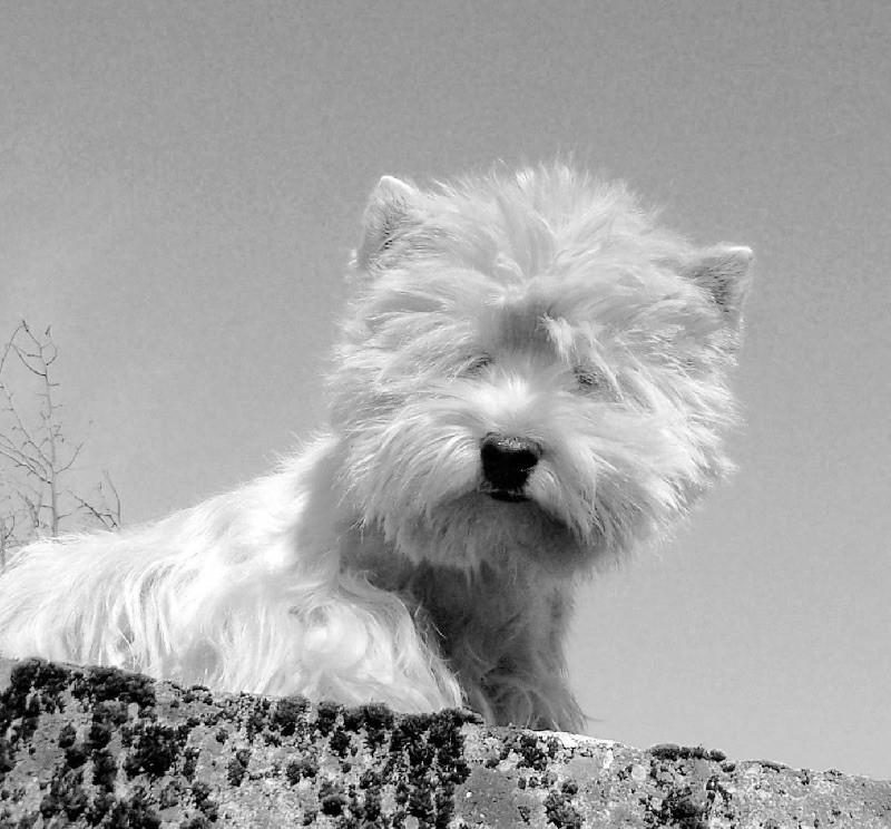 Accueil - Elevage des Ormeaux d'Antan - eleveur de chiens