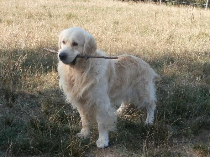 Accueil - Elevage of caniland's dream - eleveur de chiens