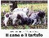 - I Nostri CANI (ENCI) giugno 2013