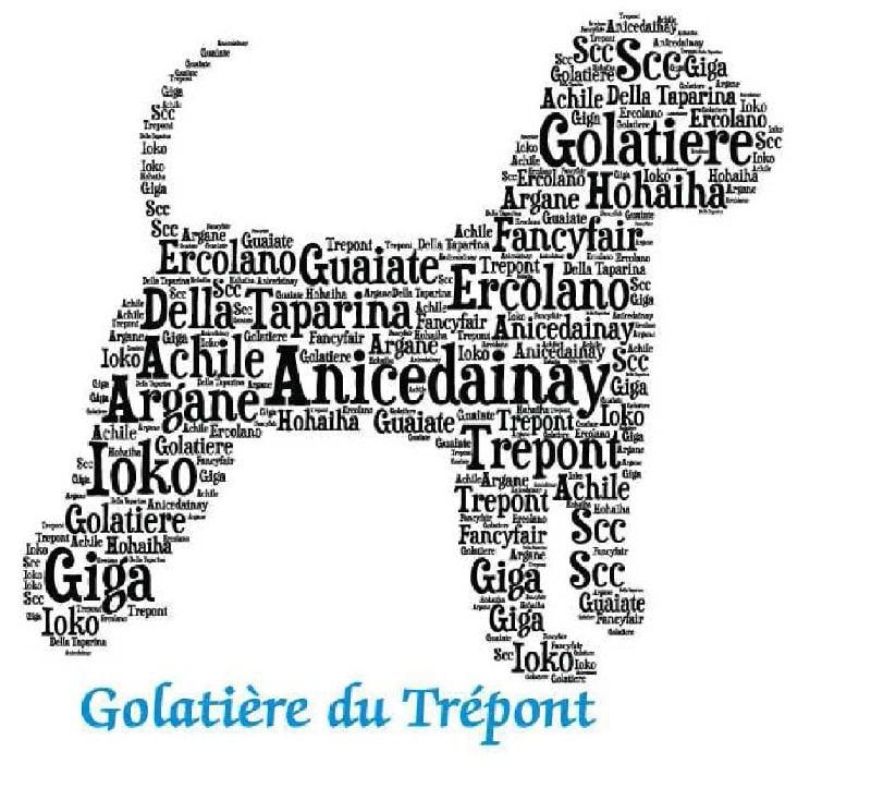 chiot Lagotto Romagnolo Golatière du Trépont