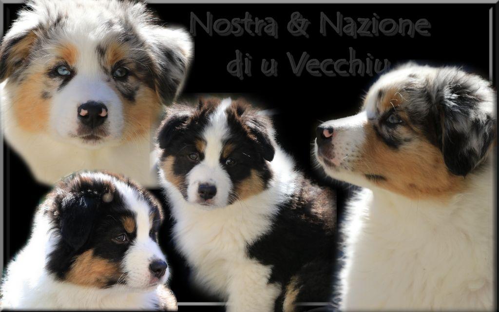 di u Vecchiu - Nos nouveaux espoirs : Nostra & Nazione