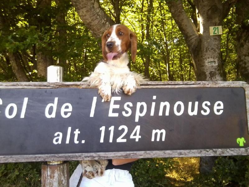 Publication : des Hauts de L'Espinouse  Auteur : V. Villeneuve - Grajwoda