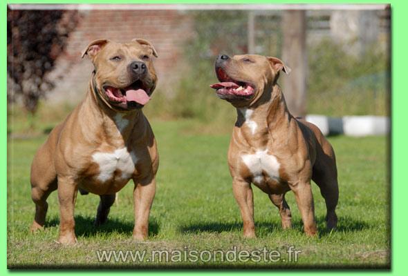 Archos De la Maison d'Este chien de race toutes races en