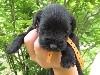 mâle collier orange