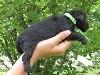 femelle collier vert