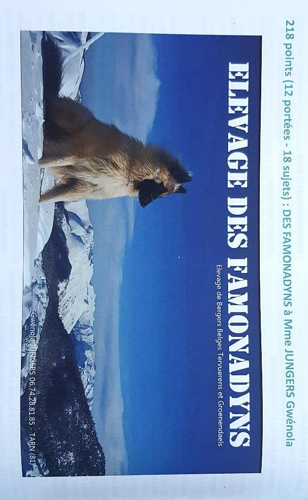 des Famonadyns - 1er elevage de berger belge tervueren classé par le CFCBB