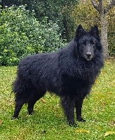 Loup des Famonadyns