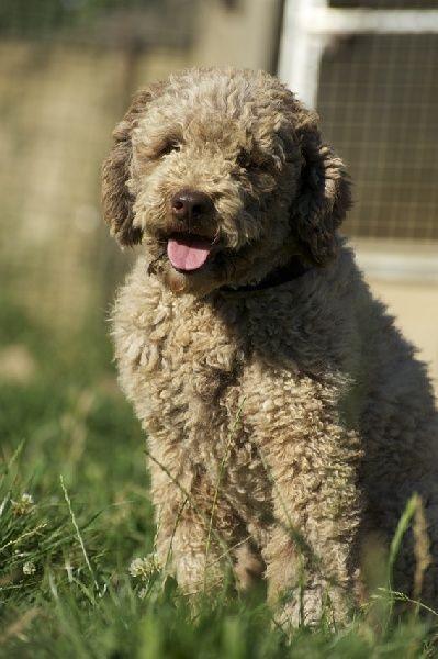 Accueil - Elevage De la paix retrouvee - eleveur de chiens