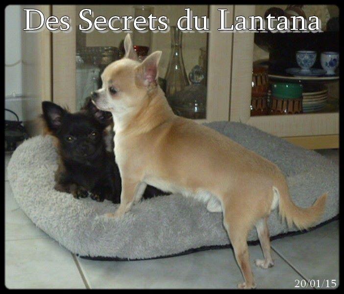 Just for me des Secrets du Lantana