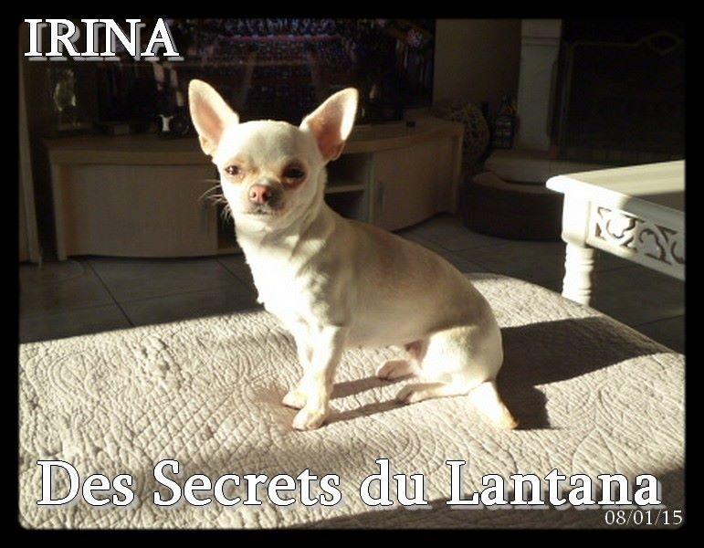 Irina for des secrets du lantana Titre Initial