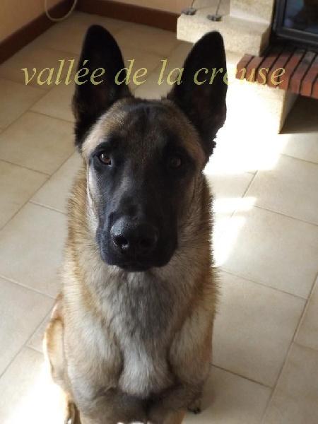 Invictus de la vallée de la Creuse