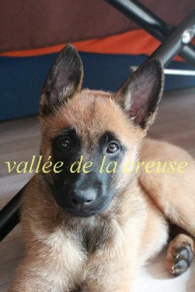 Jinn de la vallée de la Creuse
