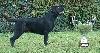 - Best In Show Jeune à la Nationale d'élevage