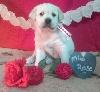 i'Hatchi (Miss Rose)